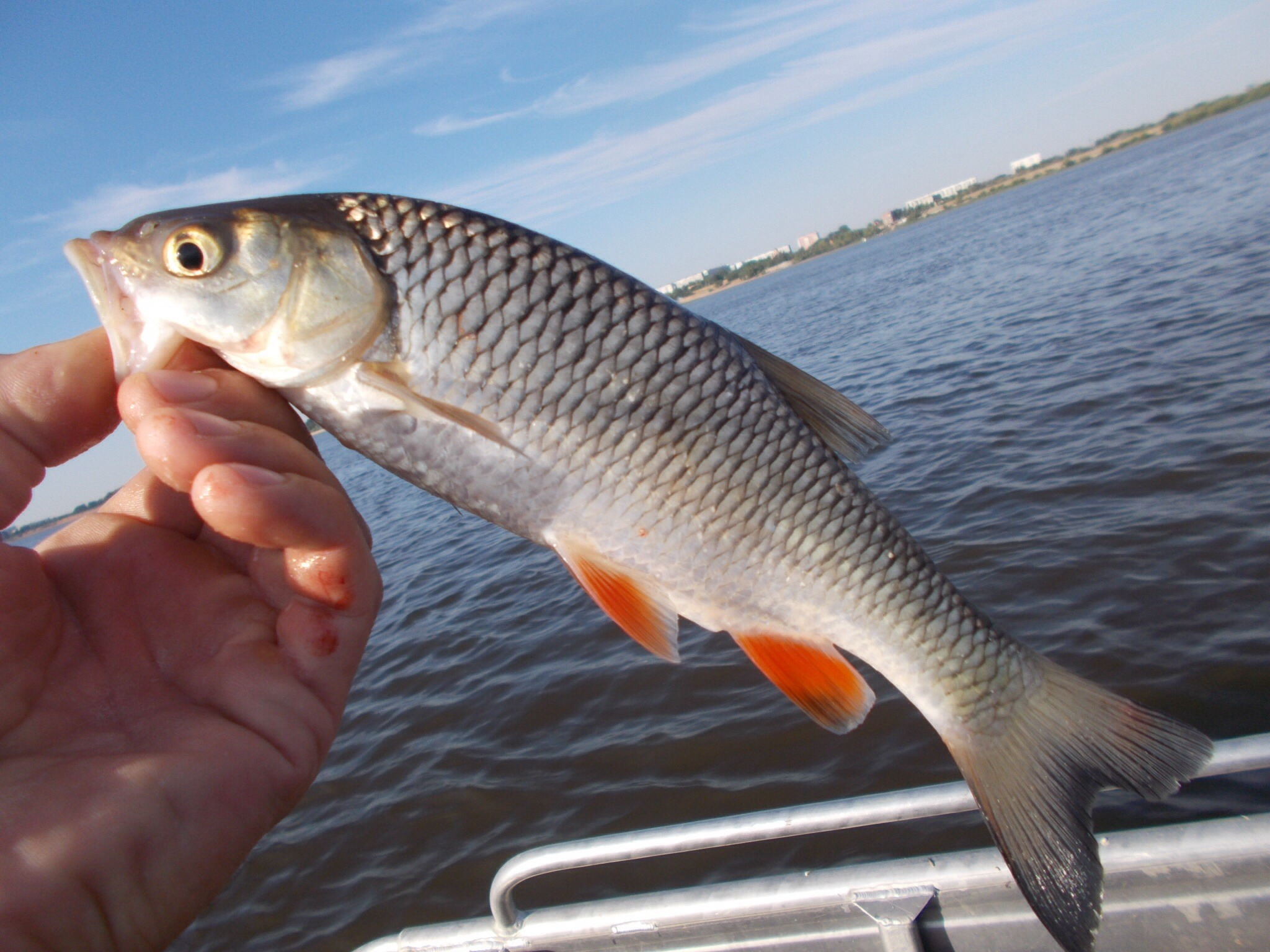 лотос рыбалка